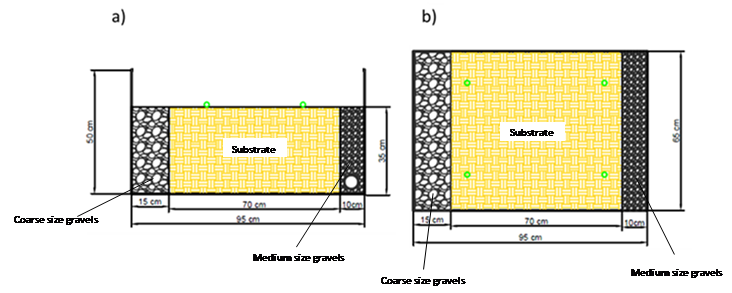 Fig. 2. Cross section (a) and plan view (b) of horizontal sub-superficial flow units (green dots represent the position of sunflowers)